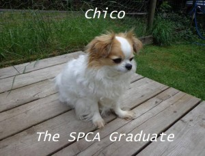 Chico The SPCA Graduate